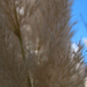 Tall Beachgrass and Sky III