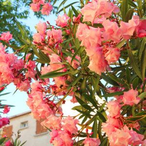 Tree Flower II