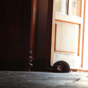 Porcupine Door Stop